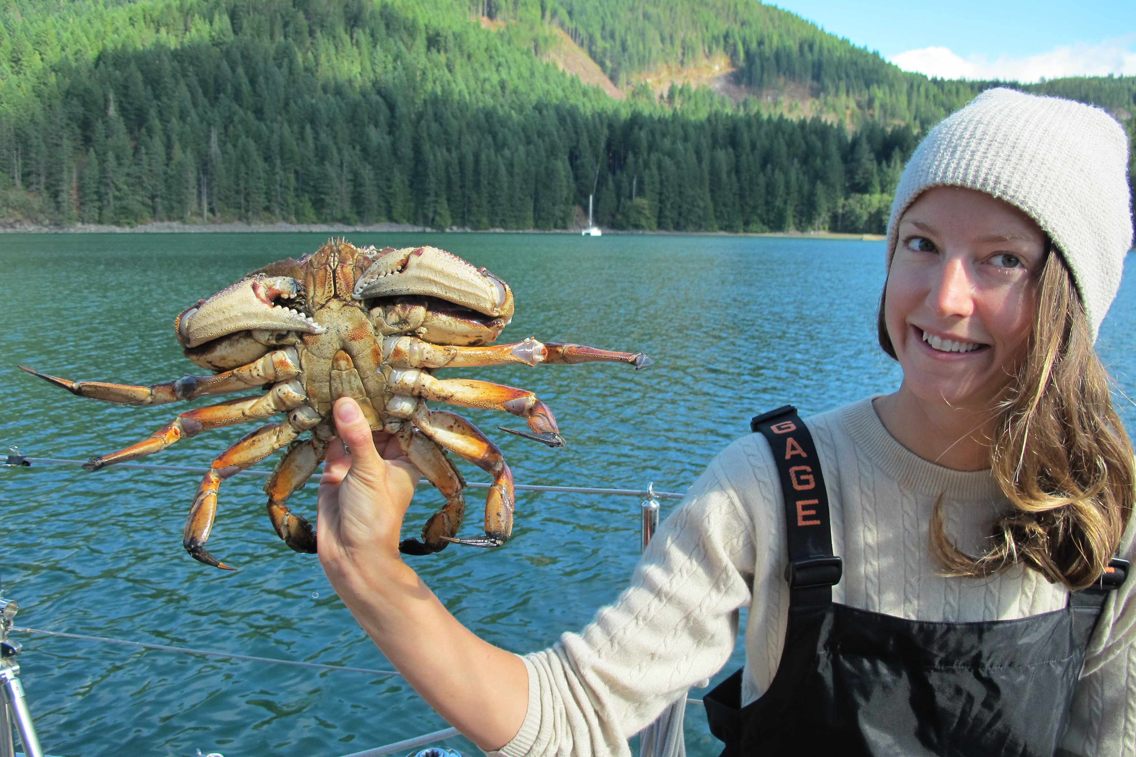 Biggest Dungeness Crab we ever caught, over 3 lbs!