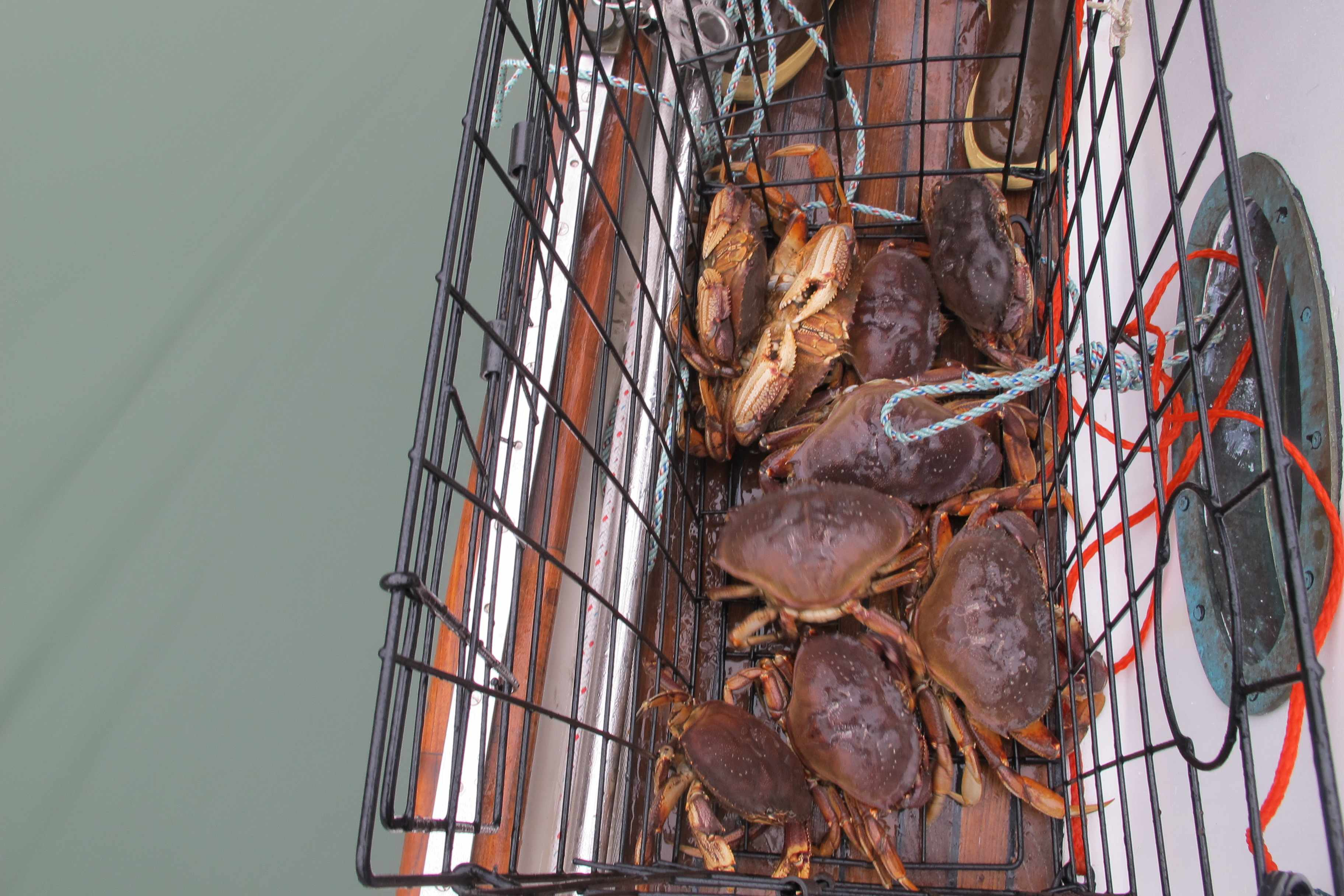 It's not only the fishing that was easy. Dungeness crab feast, again!