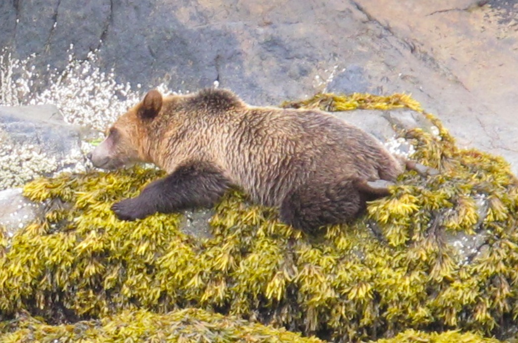 This is a close-up of the previous picture and Saxony's favourite by far. She loves it because you can see the underside of the cute little feet of the grizzly as he/she rests on his/her stomach. How adorable is that?!